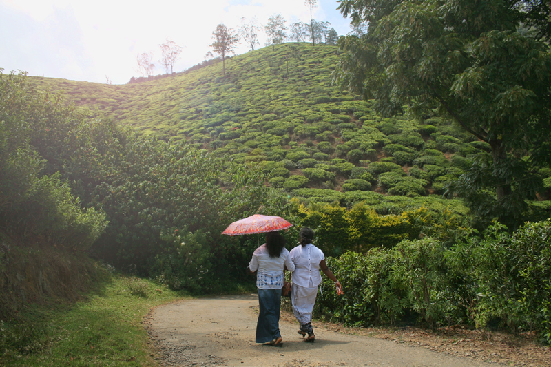 Prechádzka čajovníkom