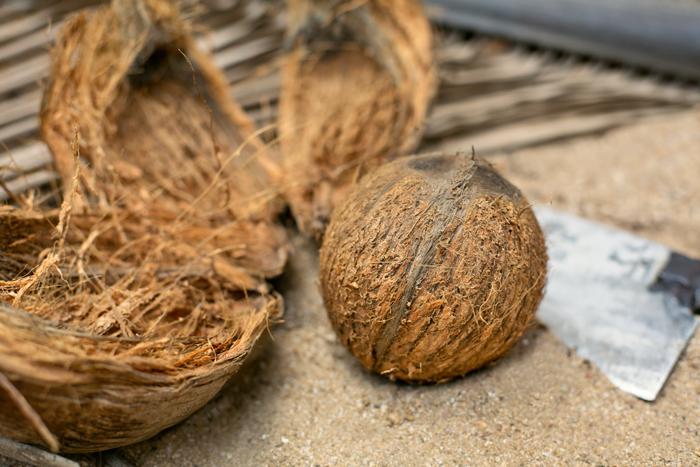 India - Goa / brigada - kokos_supka