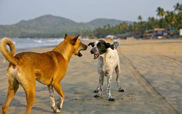 psy_plaz_goa, India