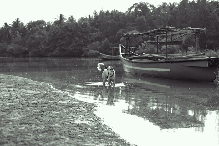 palolem_dog, Goa, Canacona, India