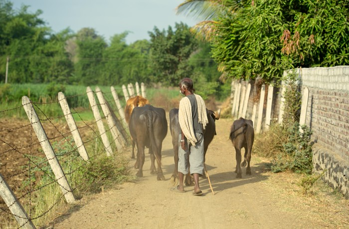 U Nayana - pastier v Gujarade