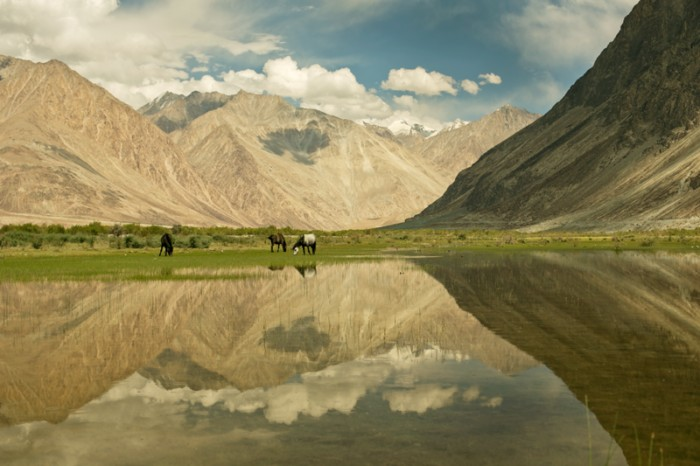 Nubra valley. Ladakh, India