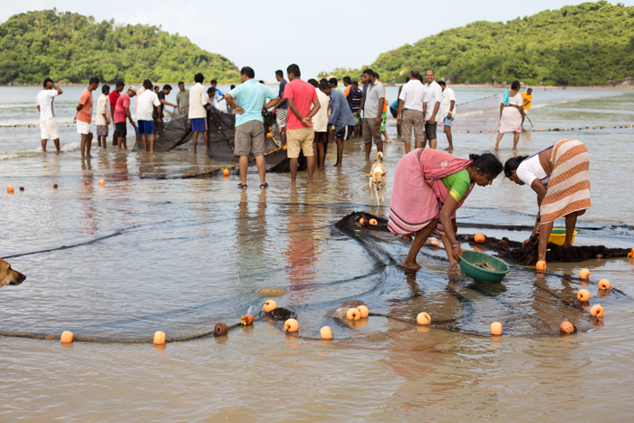 Palolem, plody mora. India, Goa