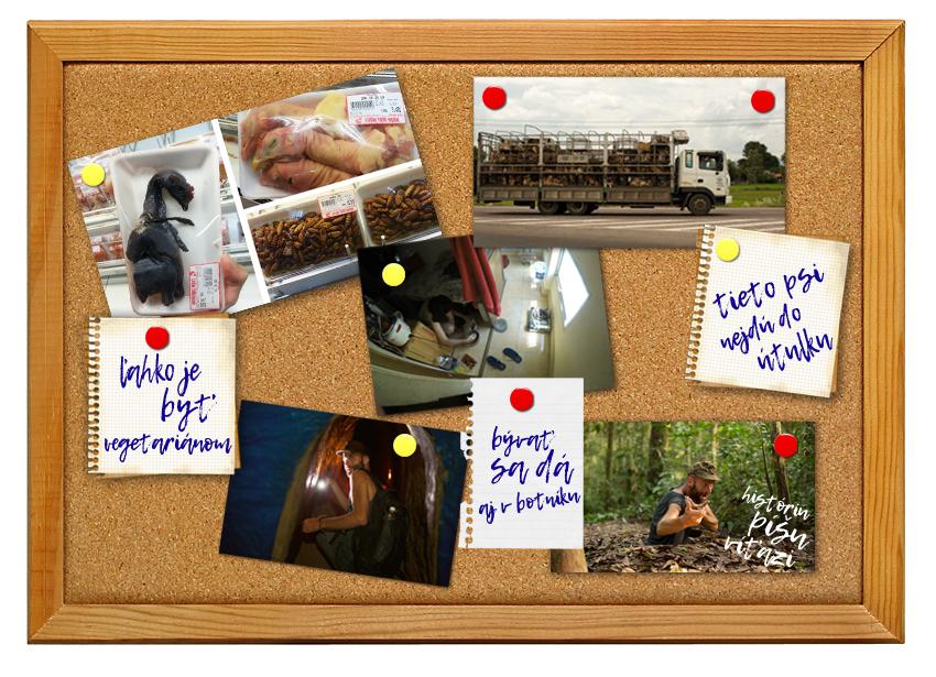 Nástenka s fotografiami z Vietnamu. Jedlo, psi, tunely